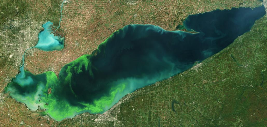 Algal bloom in Lake Erie. Image courtesy NOAA.