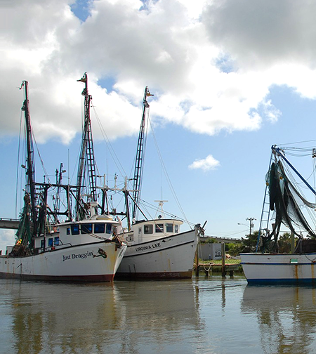 Overfishing and illegal fishing